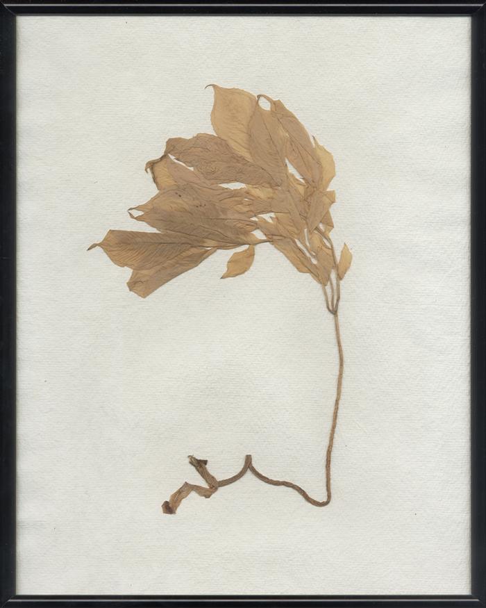 herbarium_temporis_I