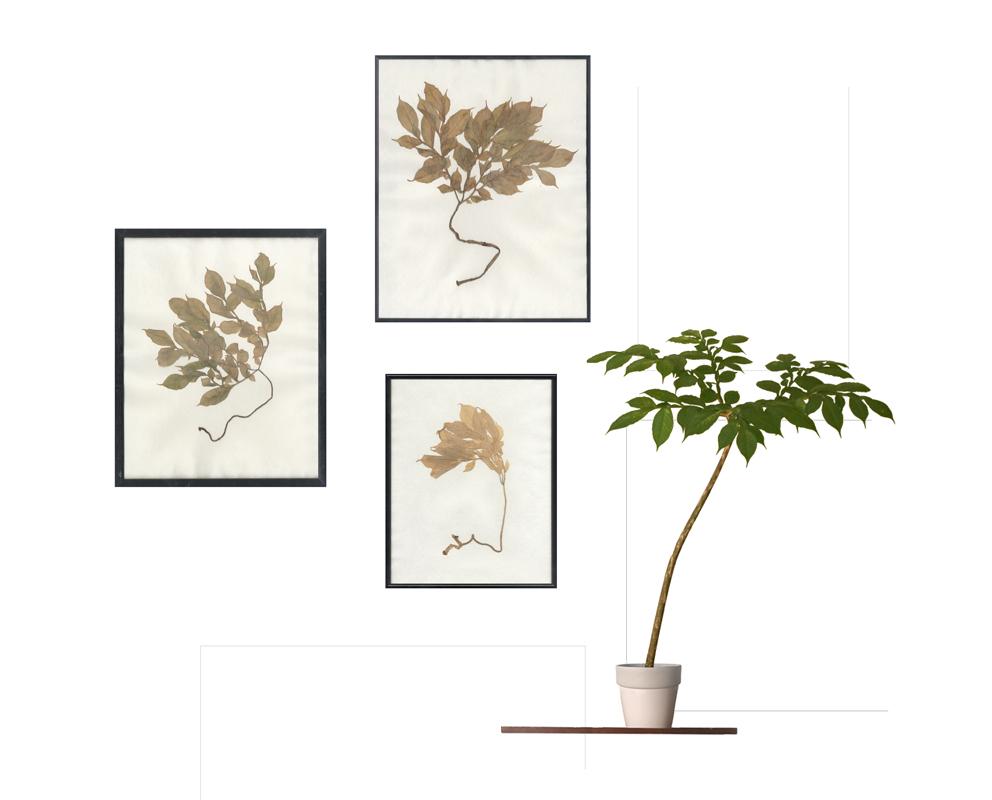 herbarium-temporis-fotocollage