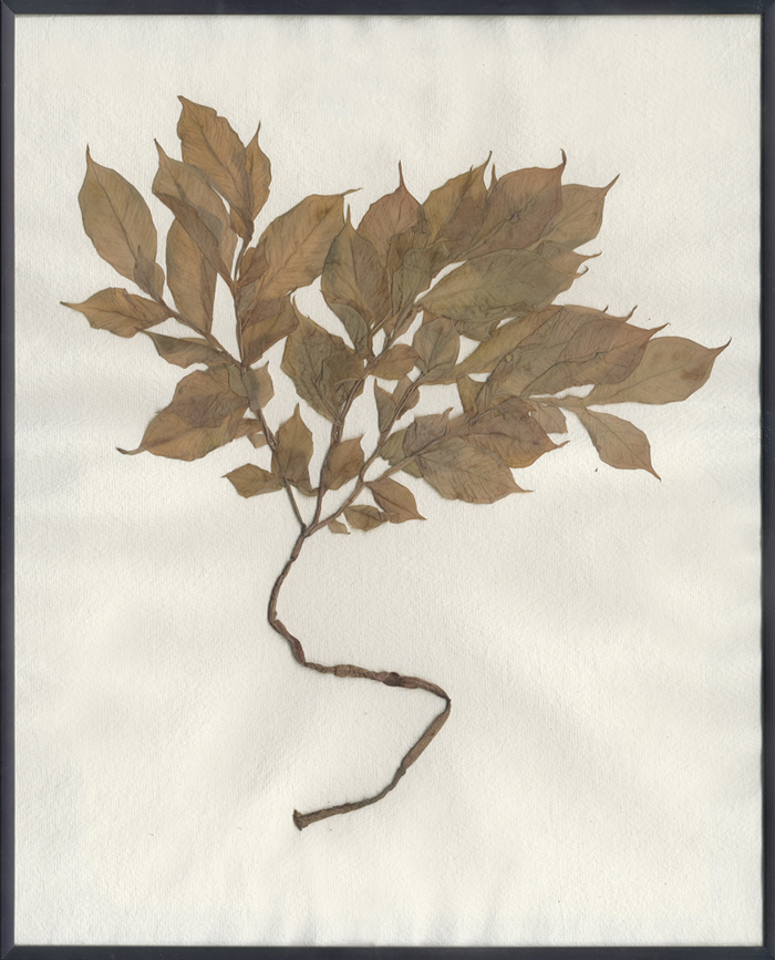 herbarium_temporis_III