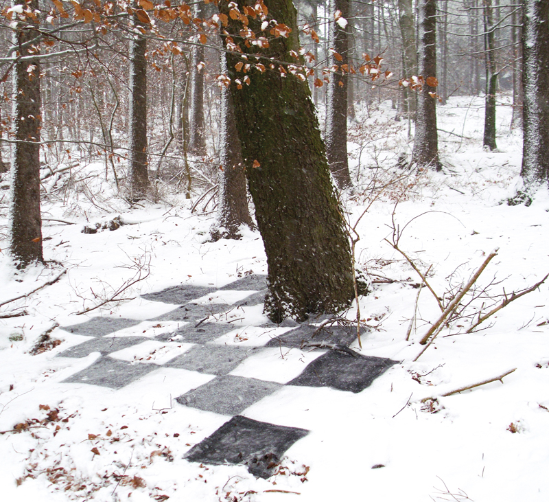 checked-pattern-on-forest-floor